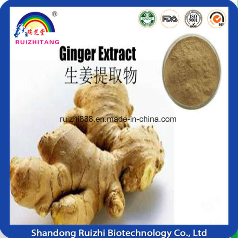 Wholesale Products Herbal Extract / Dried Ginger Extract