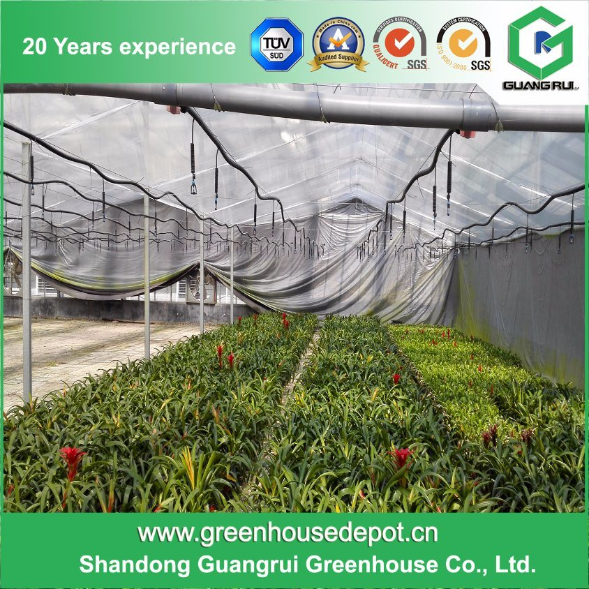 Multi-Span Tunnel/ Arched Film Greenhouse