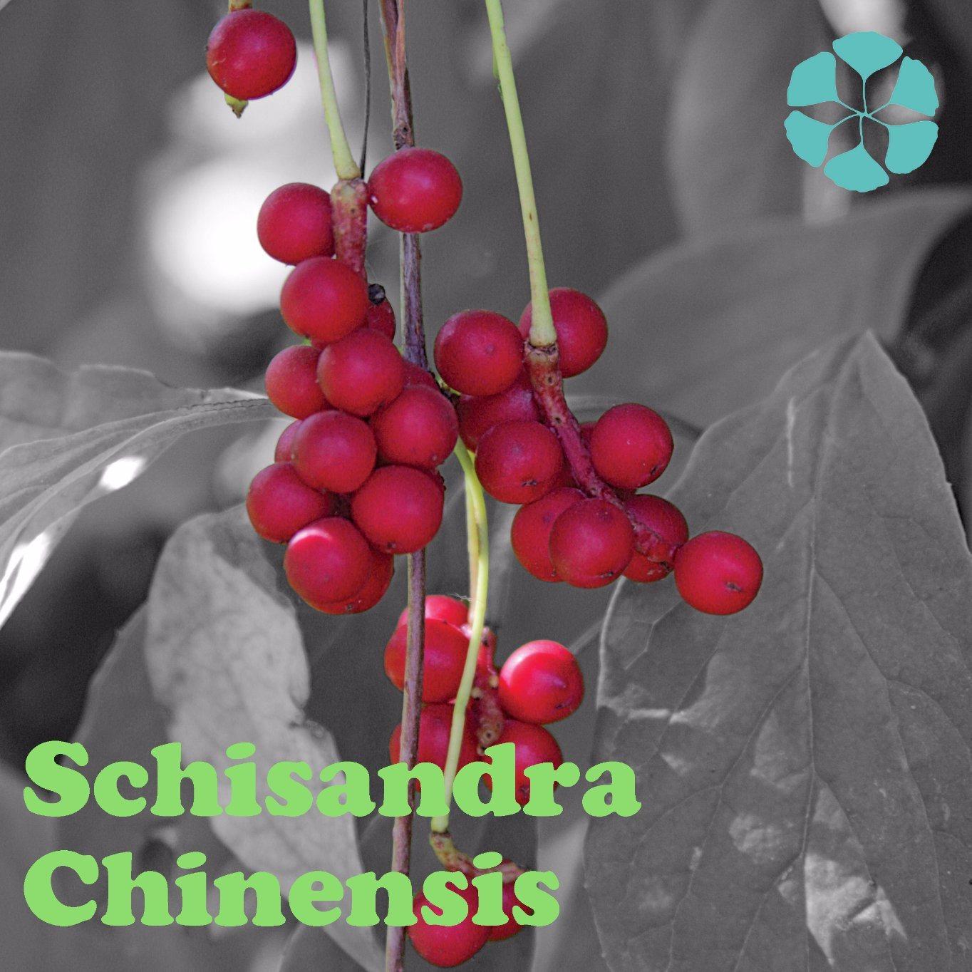Schisandra Chinensis Extract / Fructus Schisandrae Extract / Schisandrins