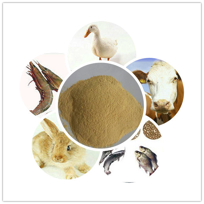 Feed Ingredients Yeast for Poultry Protein