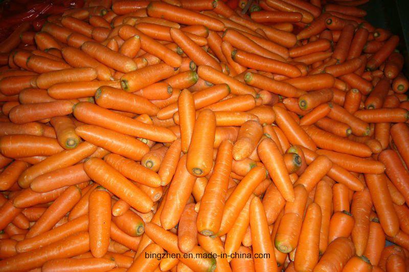 2017 Chinese Fresh Carrots From Shandong, Fujian Farm