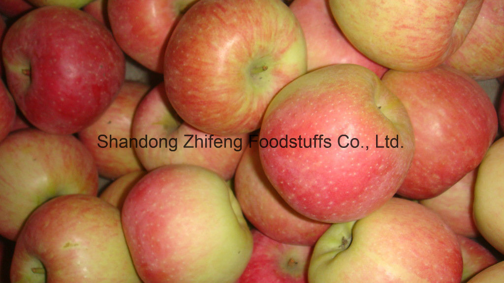 2017 Fresh New Red Star Apple with High Harvest