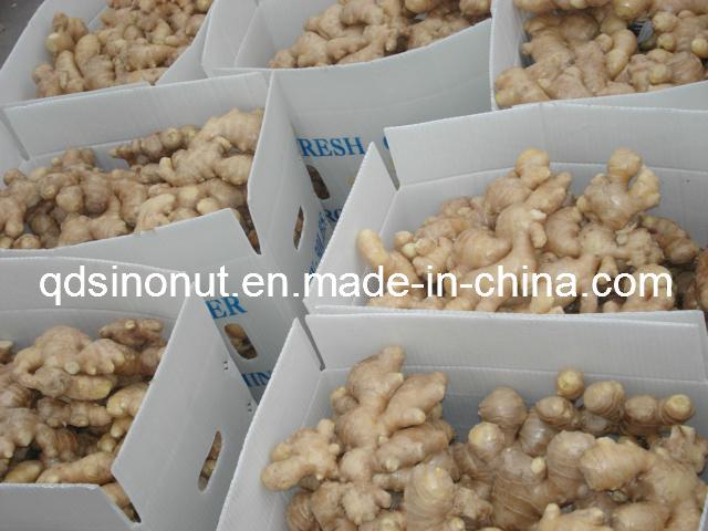 Fresh Ginger EU Quality 250g&up