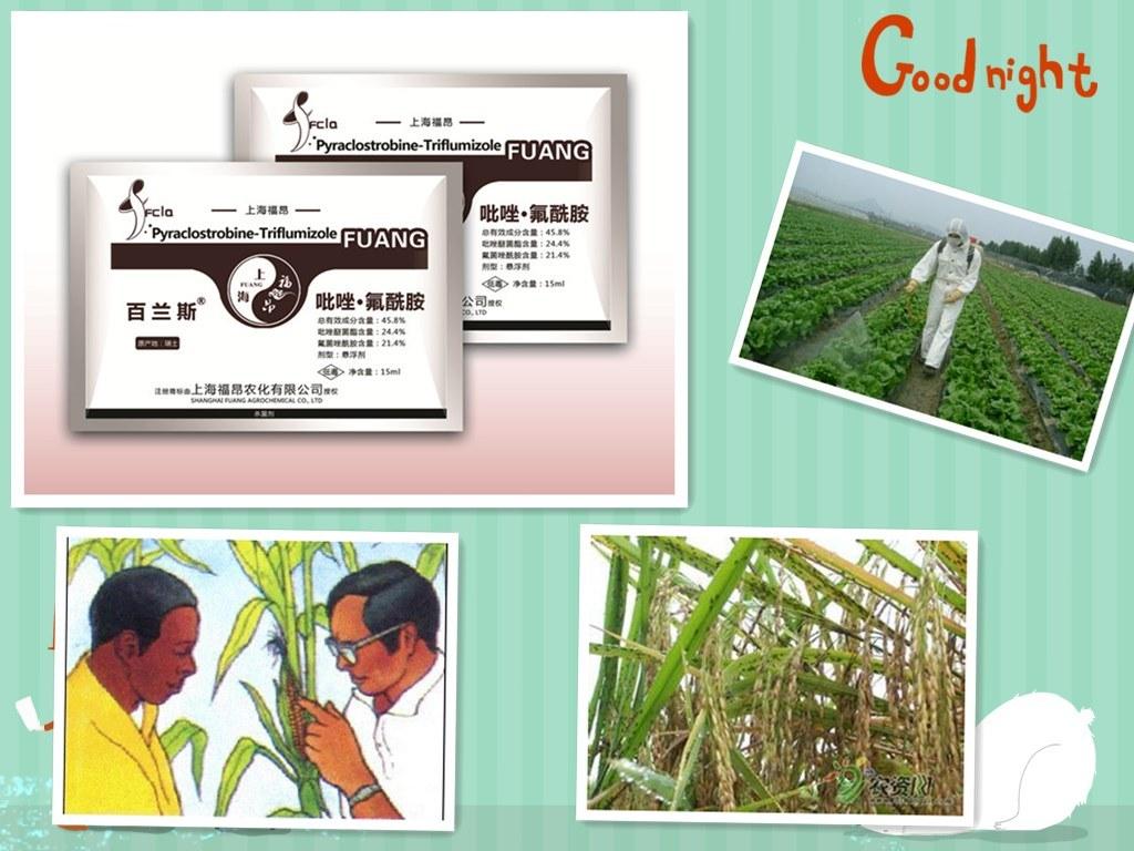 Agrochemicals Plant Fungicide Mixed Formulation - Pyraclostrobin 24.4% + Tiflumizole 21.4%