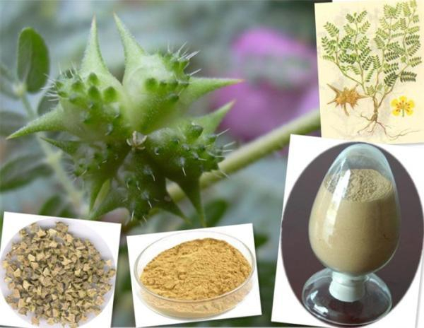40% Saponins Tribulus Terrestris Extract Powder