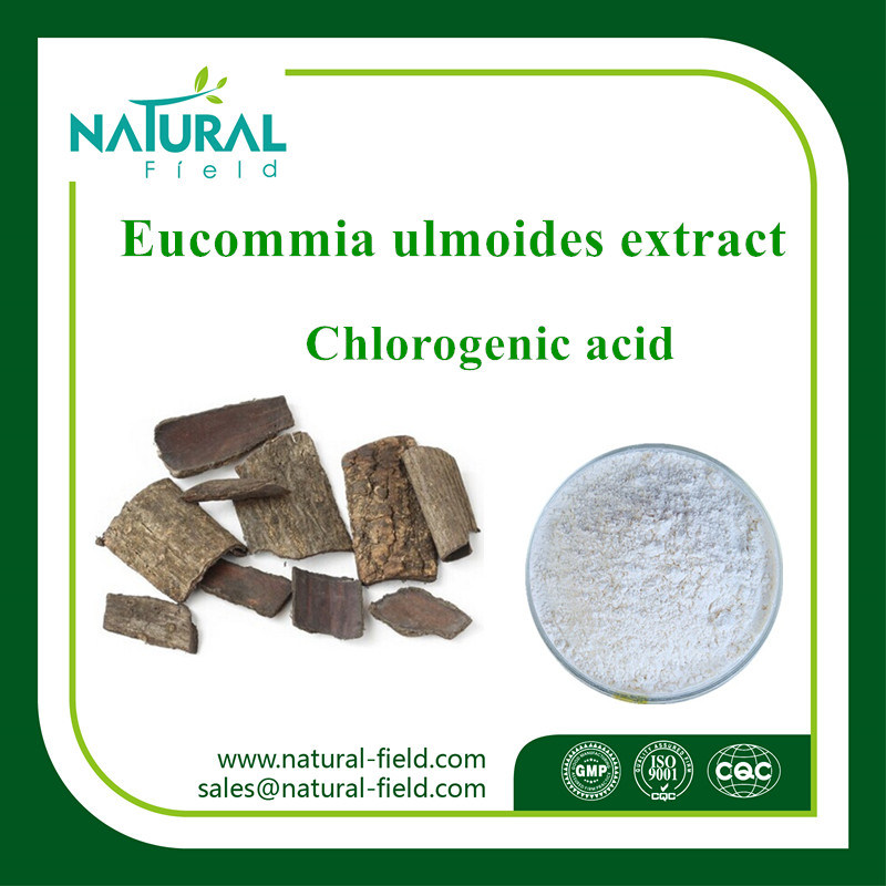 Low Price Eucommia Ulmoides Extract Powder Chlorogenic Acid Powder Used in Cosmetics Plant Extract