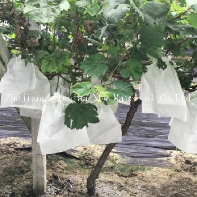 Disposable PP Spunbond Nonwoven Fabric for Plant Cover&Fruit Protection
