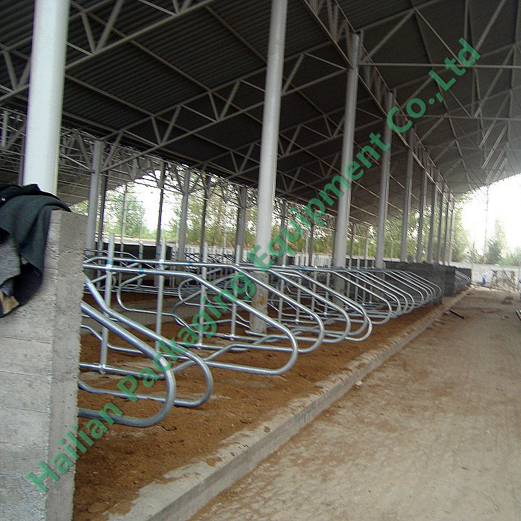 Cattle Free Stall / Cow Free Stall / Comfortable Free Stall