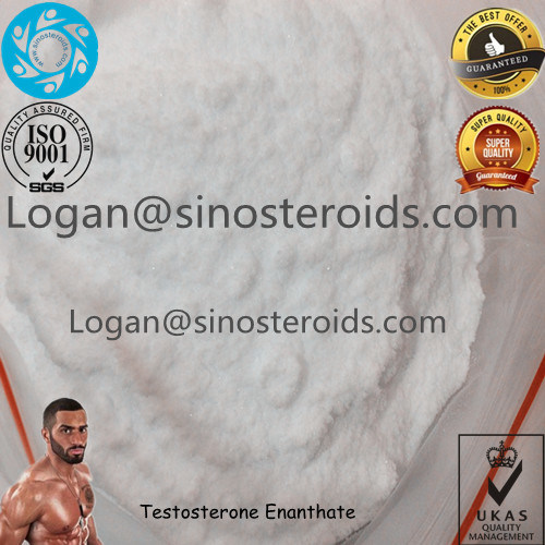 Anabolic Steroid Raw Powder Testosterone Cypionate for Muscle Buidling