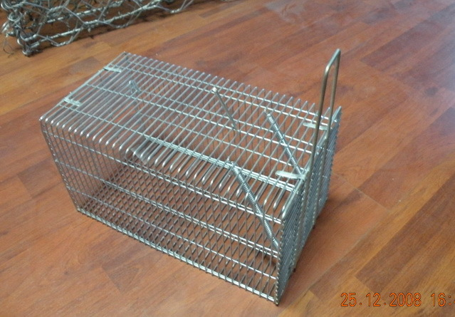 how to catch a rat in a live trap
