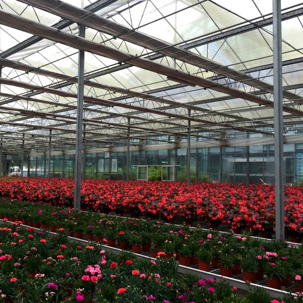 High Quality Multi Span Glass Greenhouse for Flowers