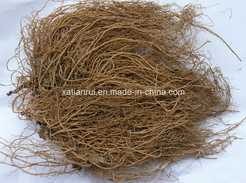 Manufacturer Asarum/The Root of Chinese Wild Ginger Extract Powder