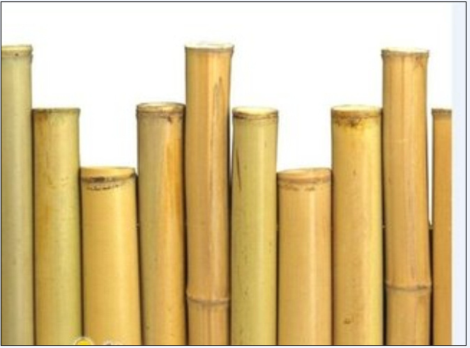 Sale Cheap Raw Dry Bamboo Poles for Various Uses