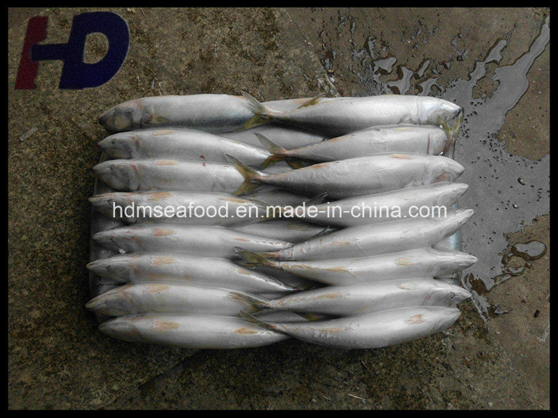 Best Frozen Seafood Fish Frozen Mackerel
