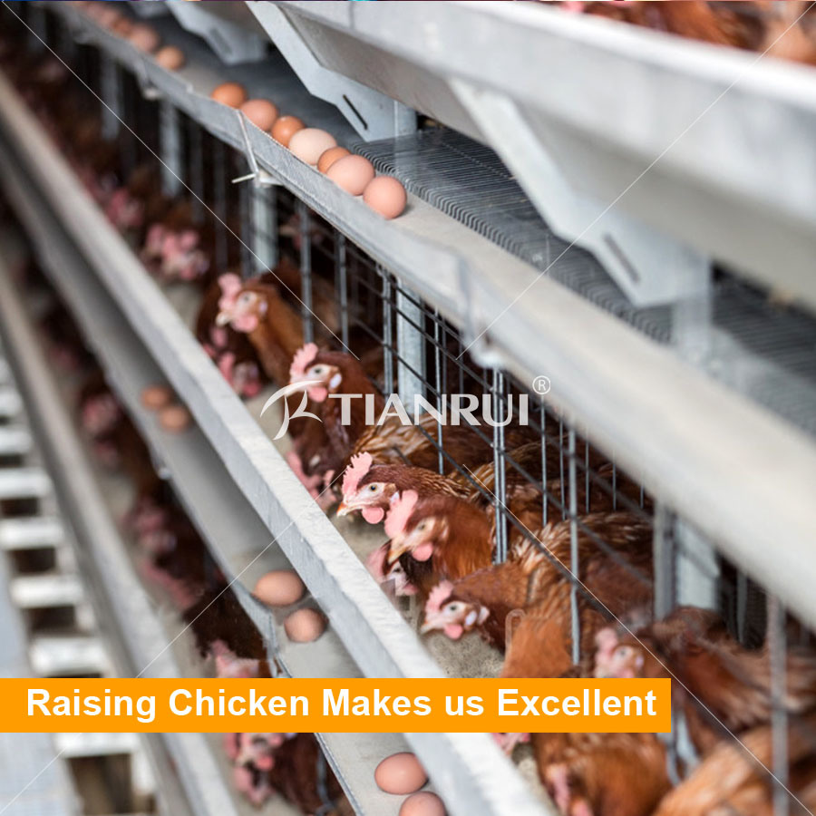 Tianrui Automatic Chicken Farm Poultry Battery Cage System/Battery Layer Poultry Cage