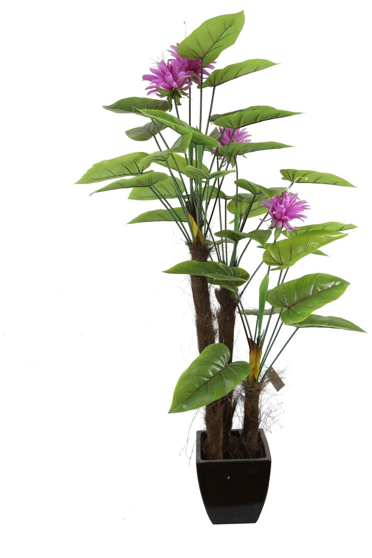 Calla di arte pianta decorativa del calla della camera for Calla pianta
