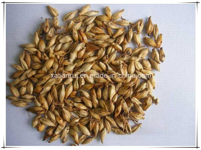 Natural Malt/ Fructus Hordei Germinatus Extract Powder