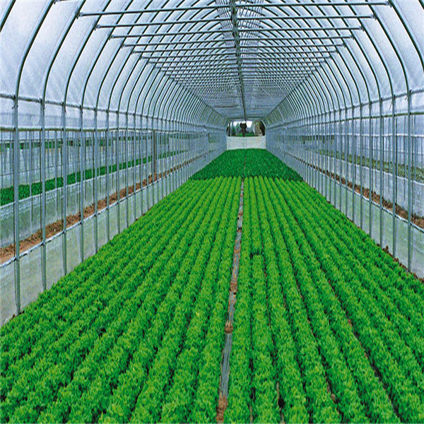 Factory Sale Best quality Single Greenhouse From China Supplier