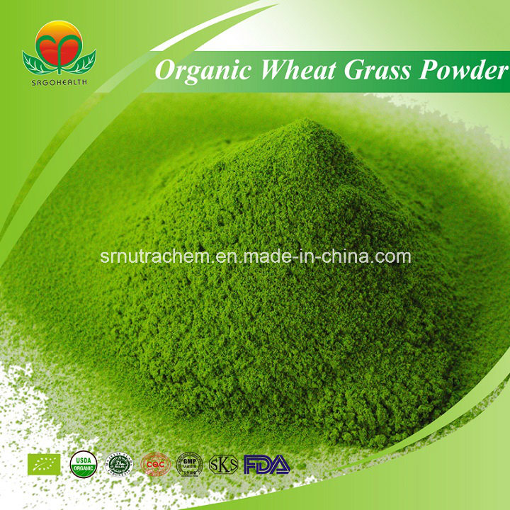 Manufacturer Supply Organic Wheat Grass Powder