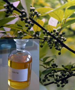 Therapeutic Grade Litsea Cubeba Essential Oil Manufacturers