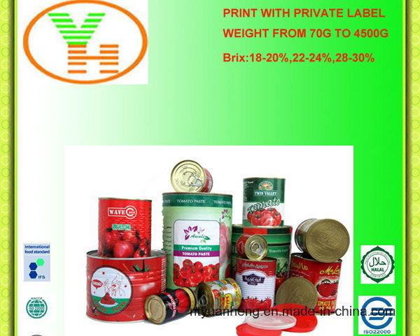 Canned Tomato Paste Wholesale Manufacturer OEM ISO Halal Food