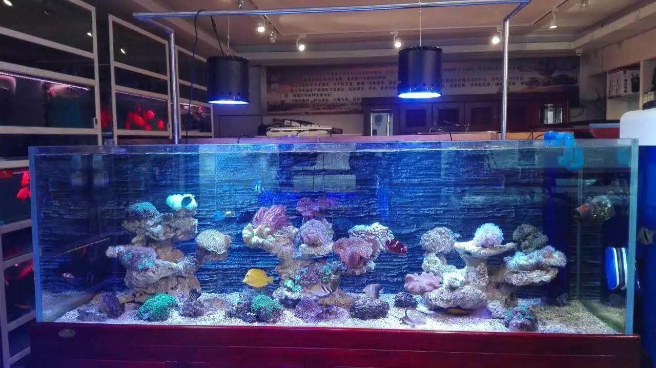 Wholesale Remote Control 60W LED Aquarium Lights