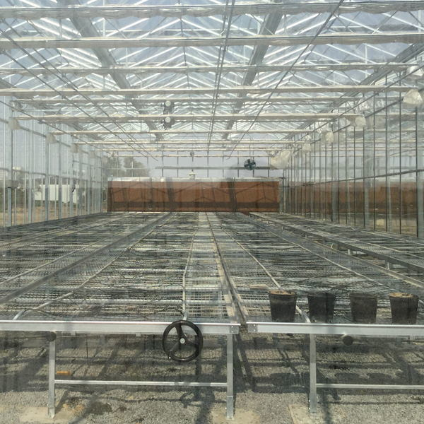 Commercial Glass Garden Greenhouse for Vegetable Growing