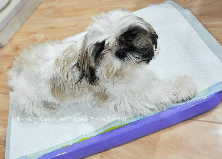 Underpad Used for Pet