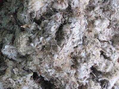 Garlic tincture tibetan - Digoxina intravenosa dilucion