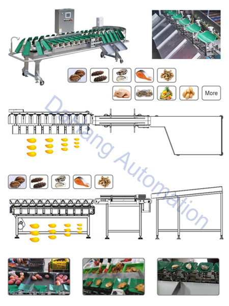 Vegetable/ Fruit and Poultry Weight Sorter