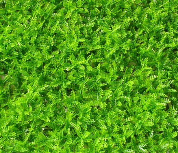 Plastic Green Moss Artificial Fence for Balcony Decoration (MW16036)