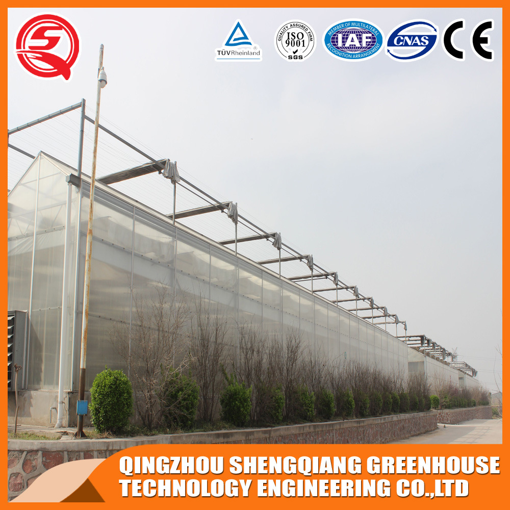 Vegetables/Garden/Flowers/Farm Multi Span Polycarbonate Sheet Greenhouses