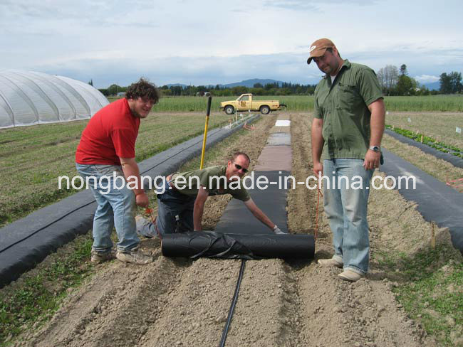 80GSM Black Weed Control Mat