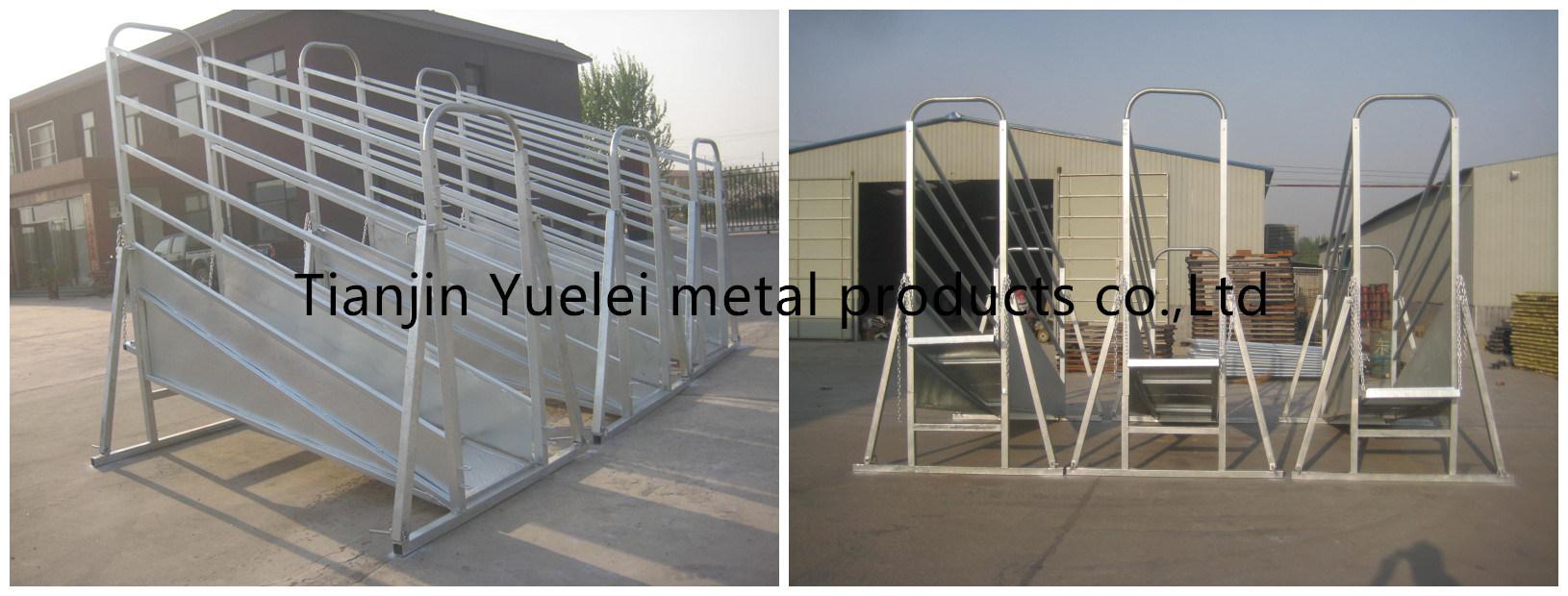 6 Rail Galvanized Cattle Panels