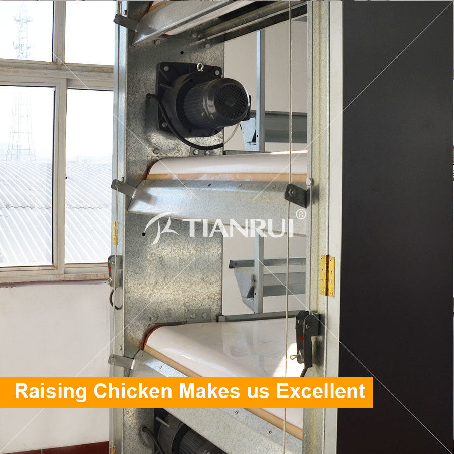 Automatic PP Belt End Poultry Manure Removing System for Chicken House