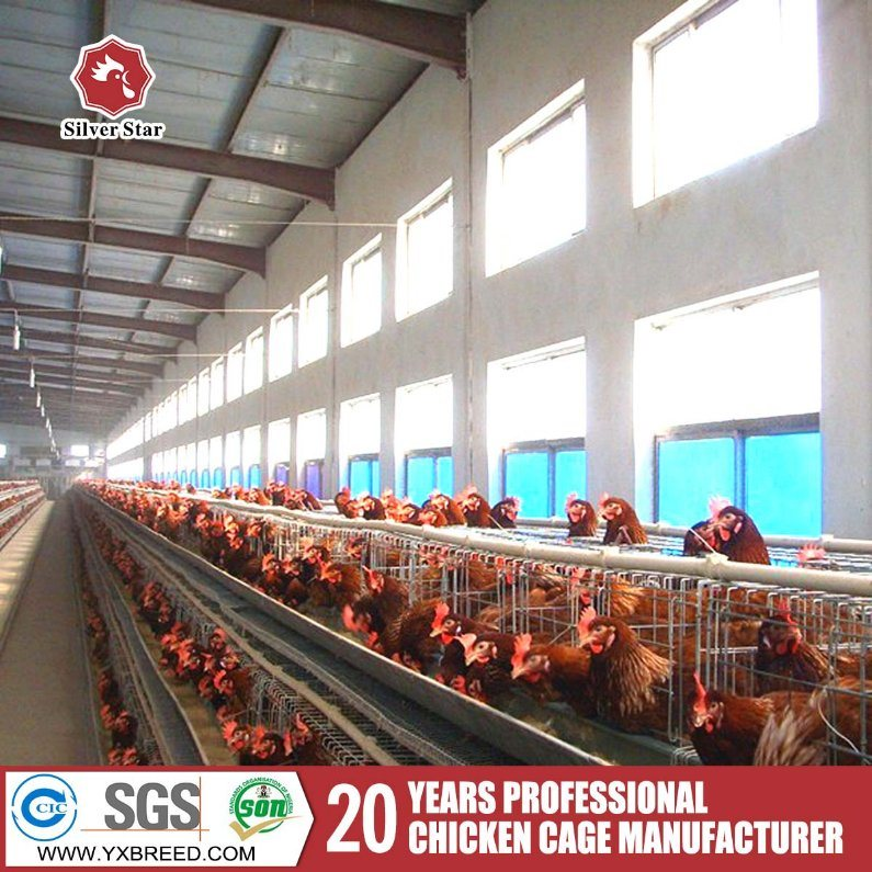 a-Type Multi-Tier Layer Cage Poultry Farm Equipment for Sale