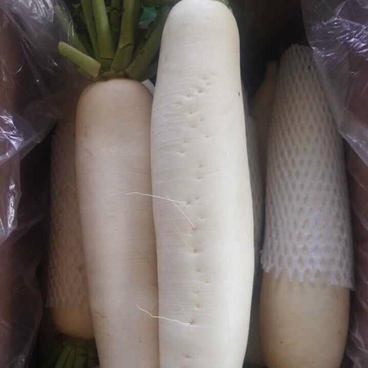 Fresh White Radish with Box Packing