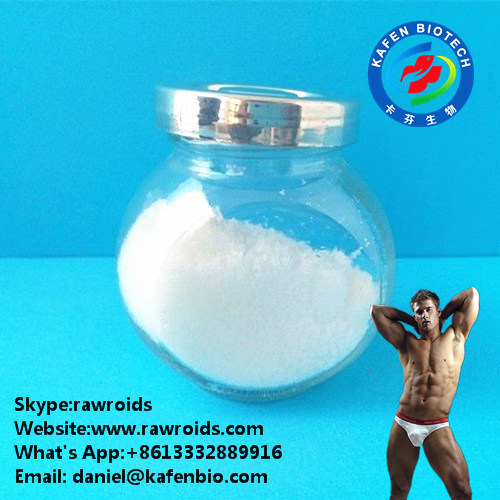White Powder 4-Androstene 4-DHEA for Bodybuilding Muscle Building