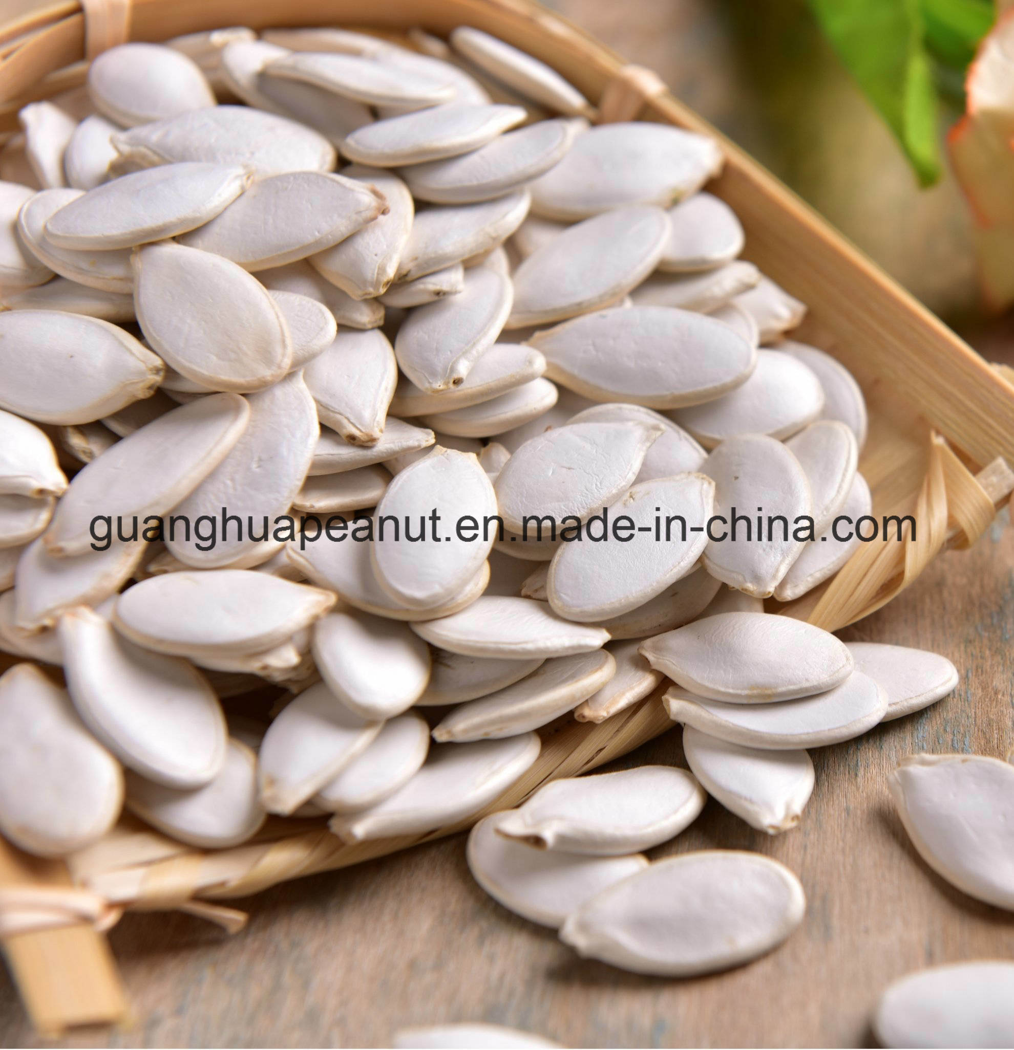 New Crop Best Quality Snow White Pumpkin Seeds