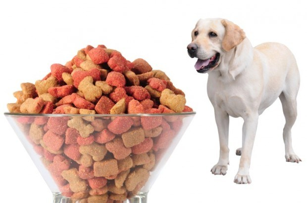 Soy Lecithin Manufacturers/Factory -Pet Food--- Concentrated Soy Lecithin Liquid