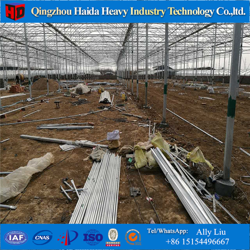 Agriculture Multi-Span Tempered Glass Greenhouse with Hydroponics Stsyem