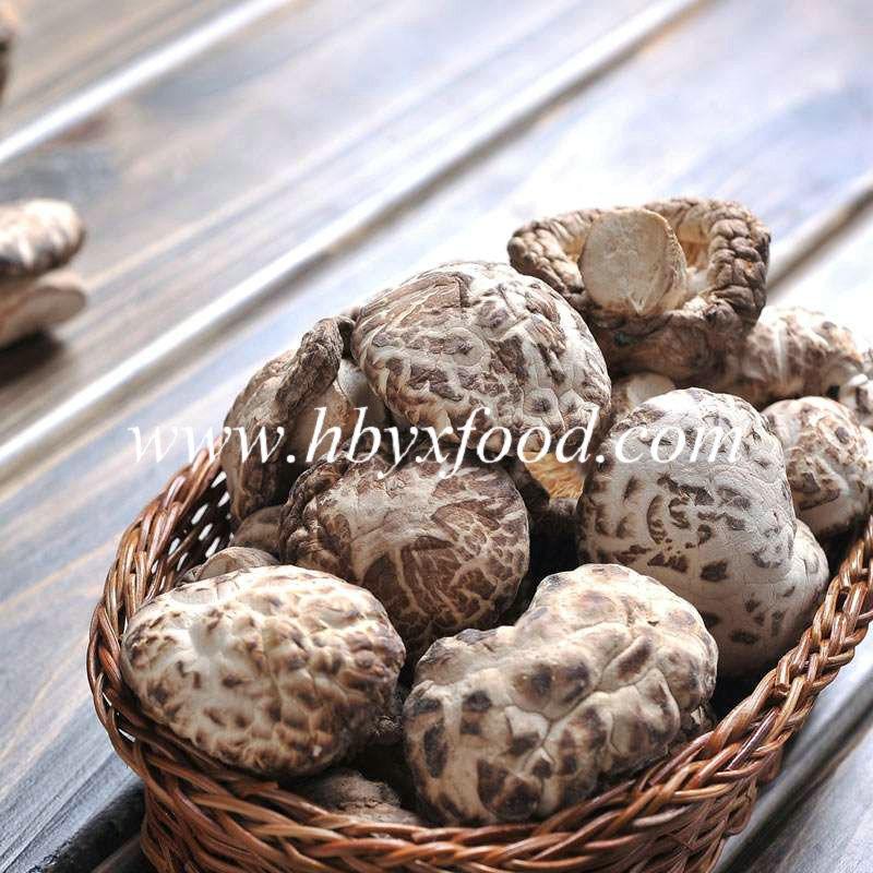 2016 Export Dehydrated Shiitake Mushroom Snack Food