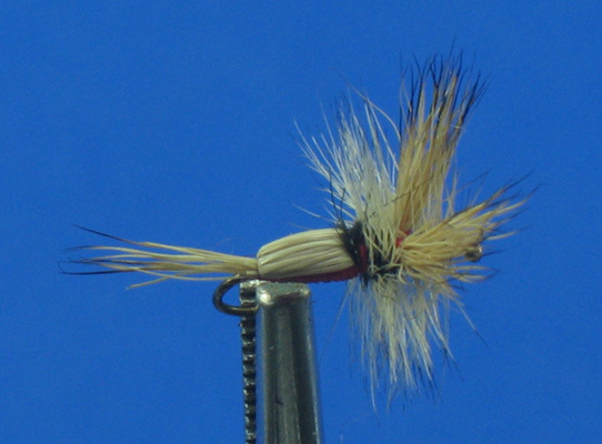 Mayfly Adult Fishing Flies The sheath is round to flat and short and hairy. Auricles are present.