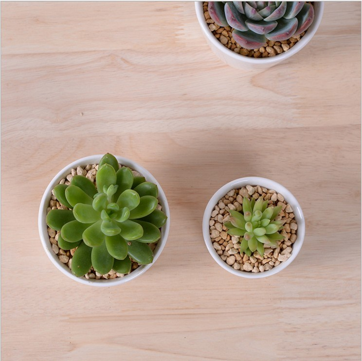 5 Lattice Box with White Ceramic Flower Pot