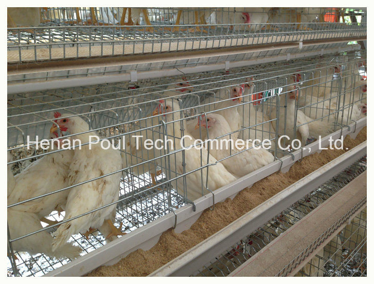 Layer Cage for Poultry Farm
