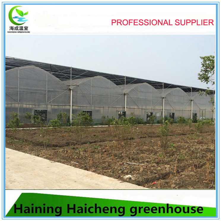 Economical Multi-Span Film Greenhouse for Vegetable Growing