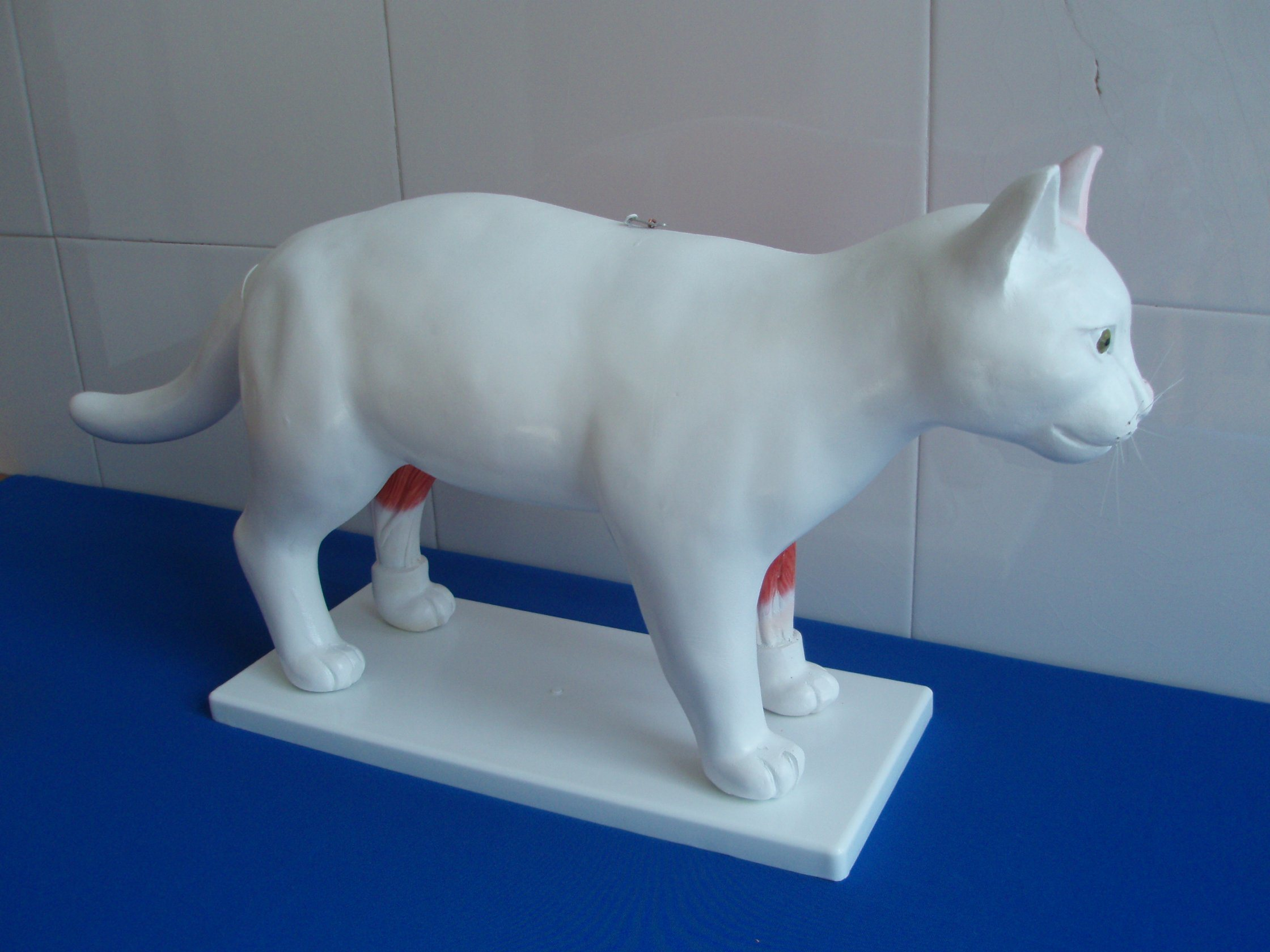 Glass Fiber Reinforced Plastics Cat Acpuncture Model