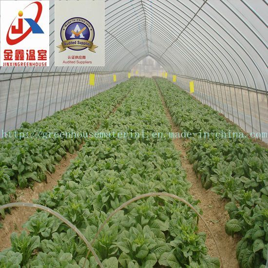 Economic and Practical Vegetable Greenhouse