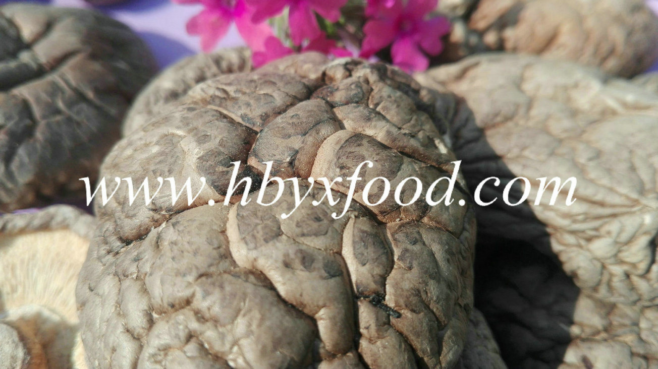 Jingmen City Healthy Food Dried Smooth Shiitake Mushroom with Lots of Nutrition