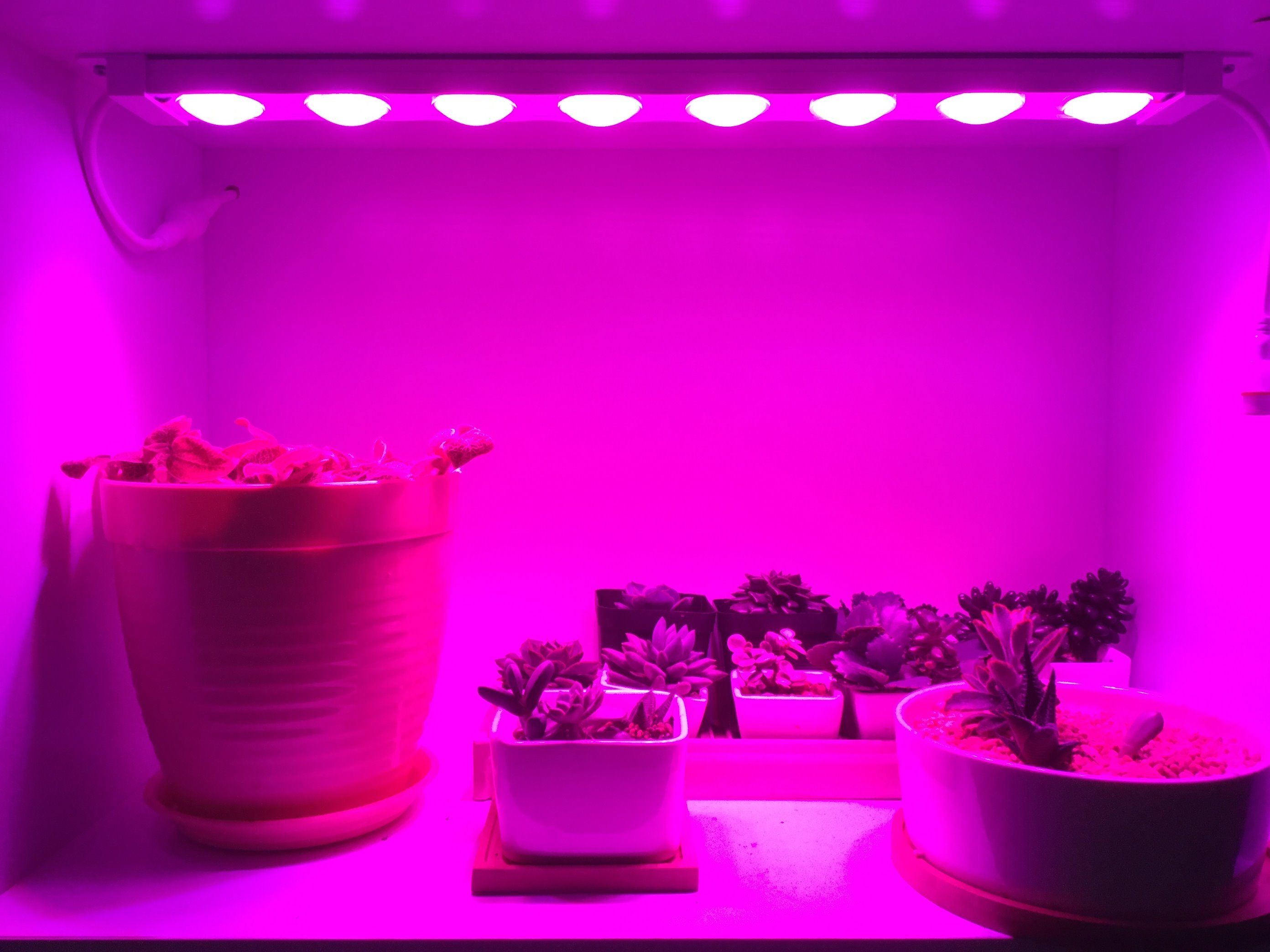 Input Voltage AC100~240V LED Grow Light Strip